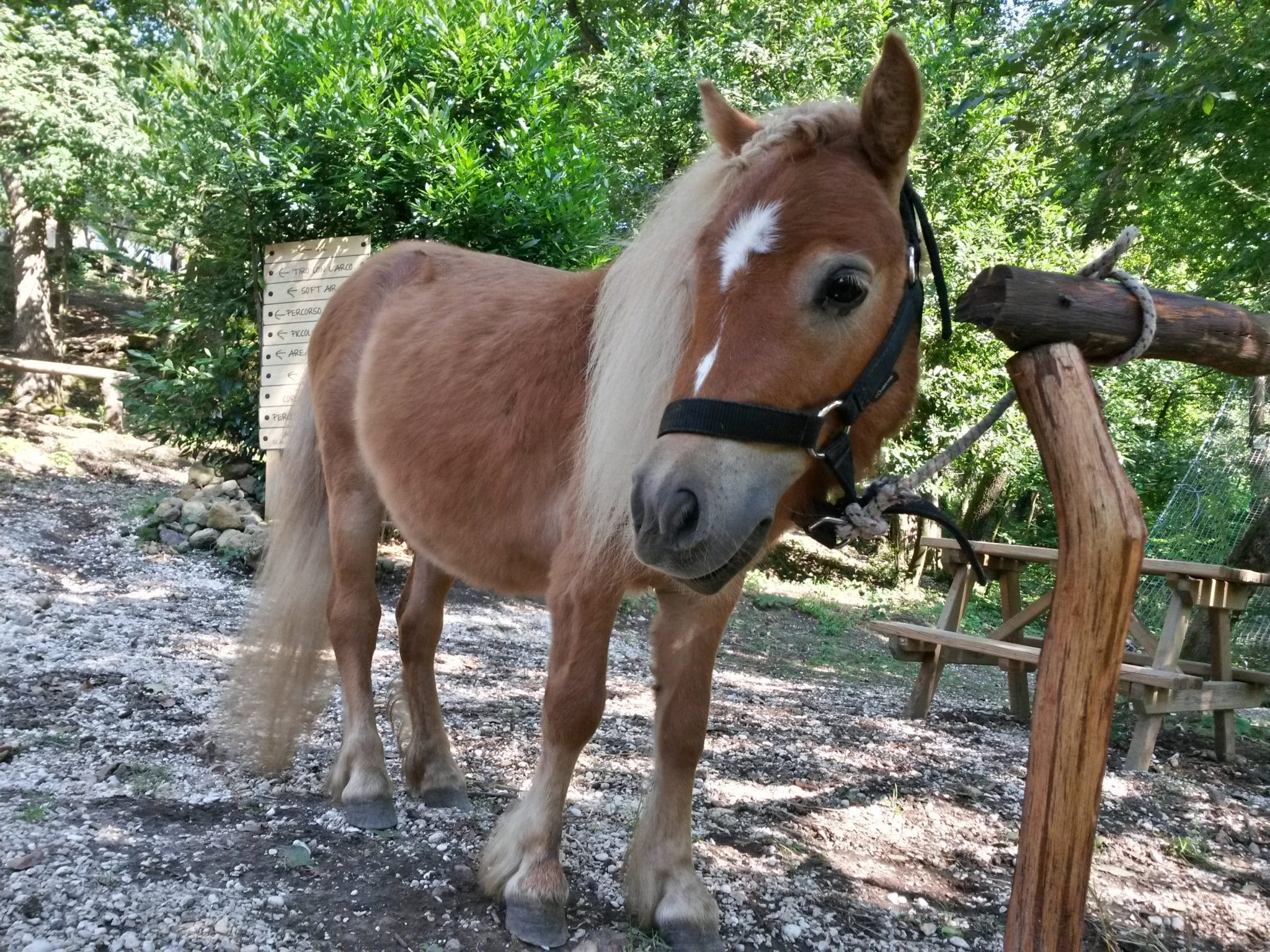 passeggiate con il pony o in calesse Passeggiate con il Pony o in Calesse 20140719 165534 RichtoneHDR