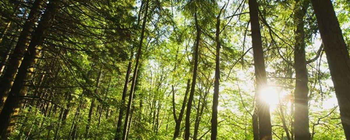 Troverai di più nei boschi che nei libri. Gli alberi e le pietre ti insegneranno… 11225403 1656315794614882 267269093605277836 n 1200x480