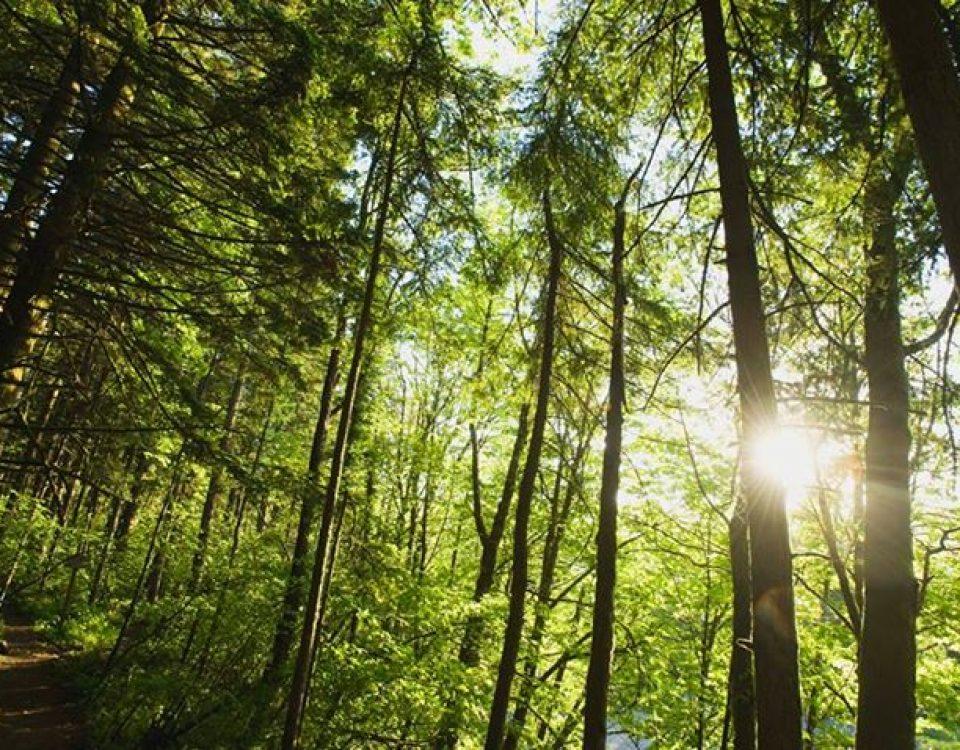 Troverai di più nei boschi che nei libri. Gli alberi e le pietre ti insegneranno… 11225403 1656315794614882 267269093605277836 n 960x750