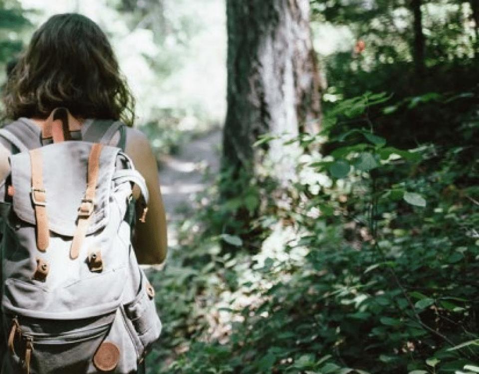 Camminare nei boschi fa bene al cervello | www.montagnenostre.net 12124837 6035382918084 1992202061 n 960x750