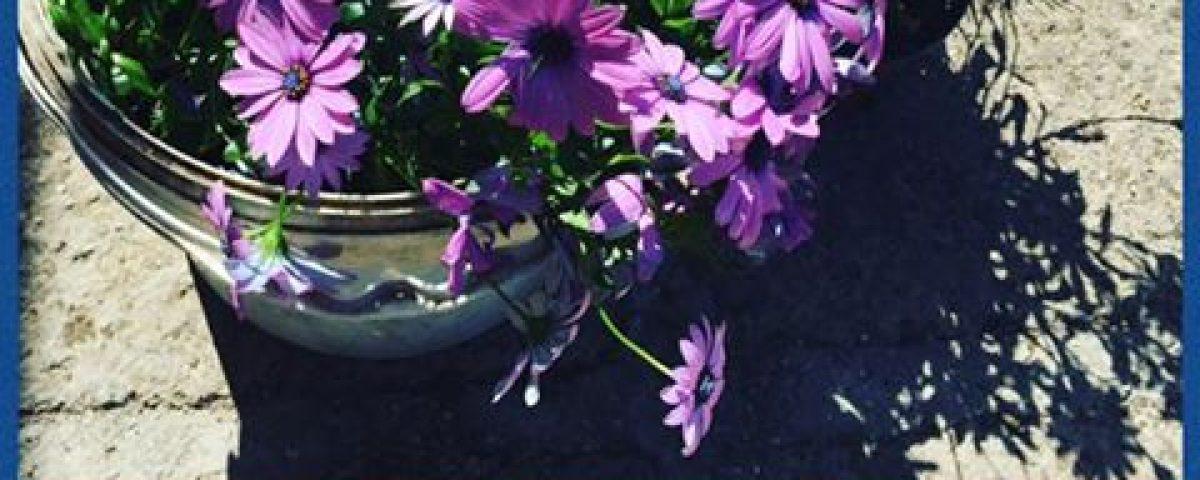 Con i meravigliosi fiori del nostro parco, lo staff del Villaggio Bushi Adventur… 13001141 1730094670570327 5601696653834533200 n 1200x480
